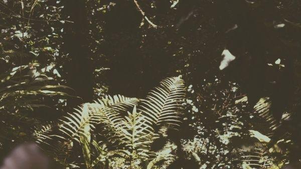 1970 Jungle