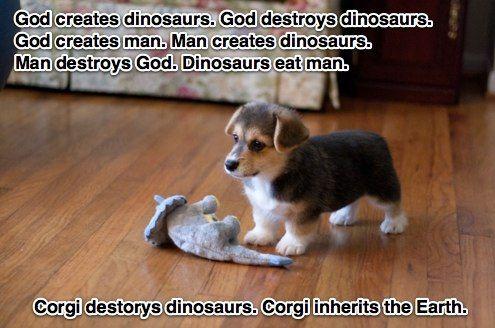 Corgi inherits the earth