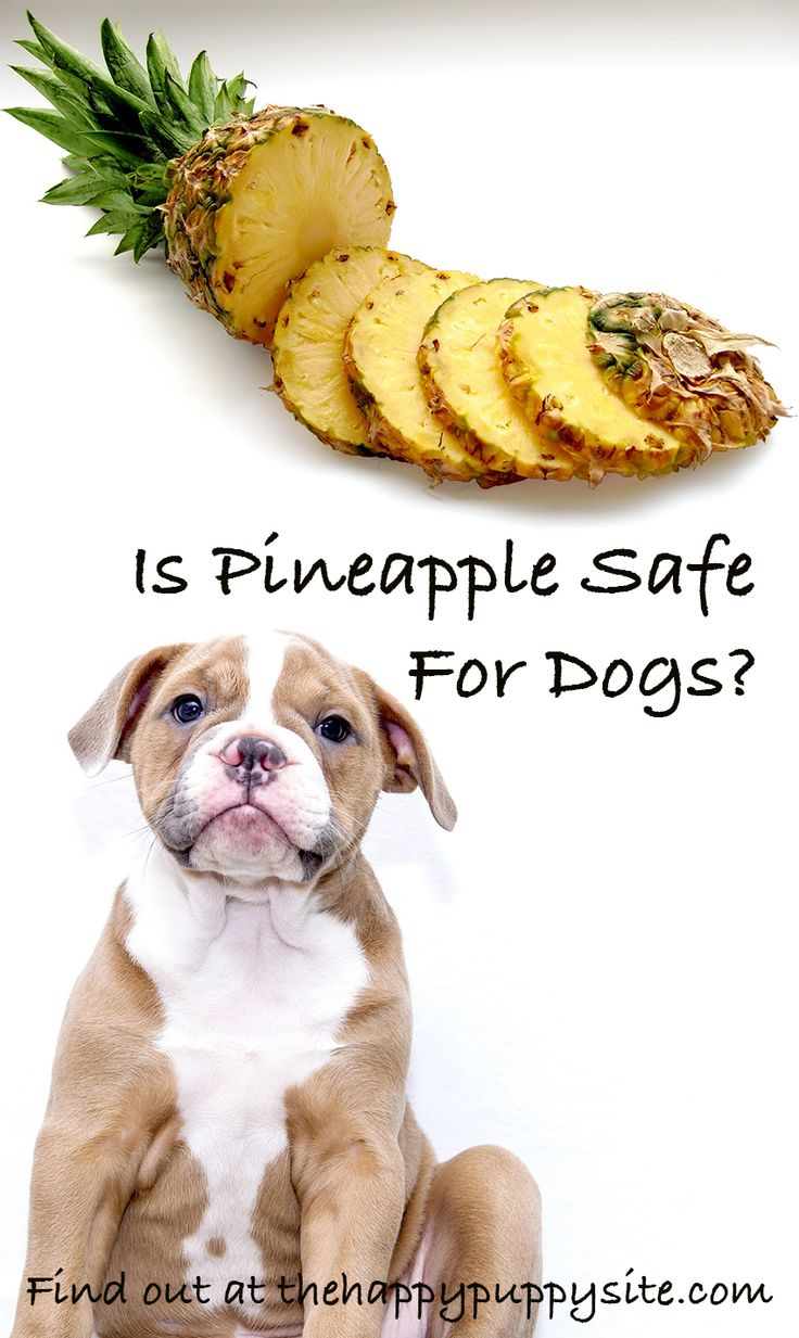 Is pineapple safe for dogs lets find out can dogs eat