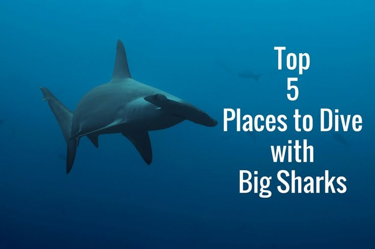 Top 5 Places to Dive with Big Sharks