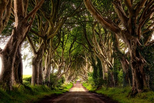 The Dark Hedges, Northern Ireland | The Best Travel Photos