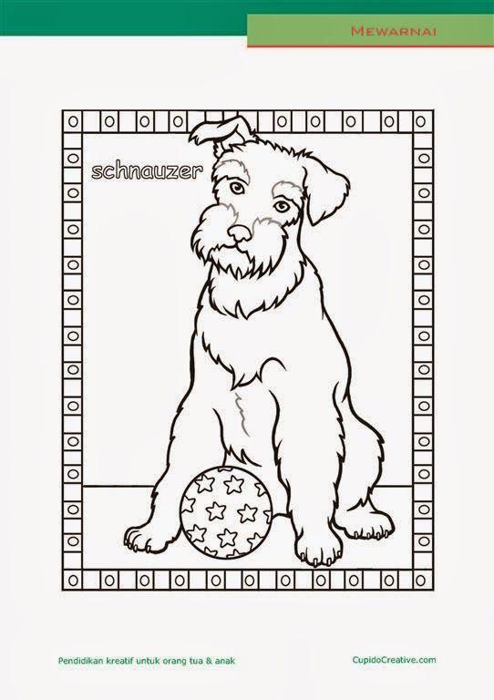lembar kerajinan anak paud (balita/TK/SD), mewarnai anjing schnauzer
