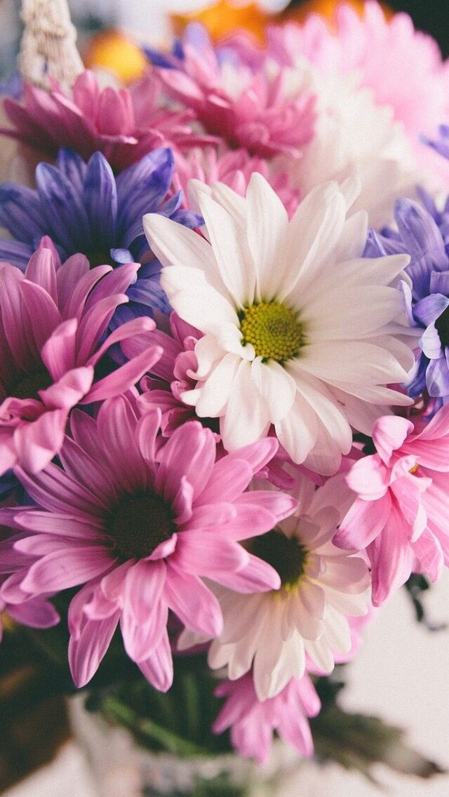 Wallpaper iPhone flowers ⚪️