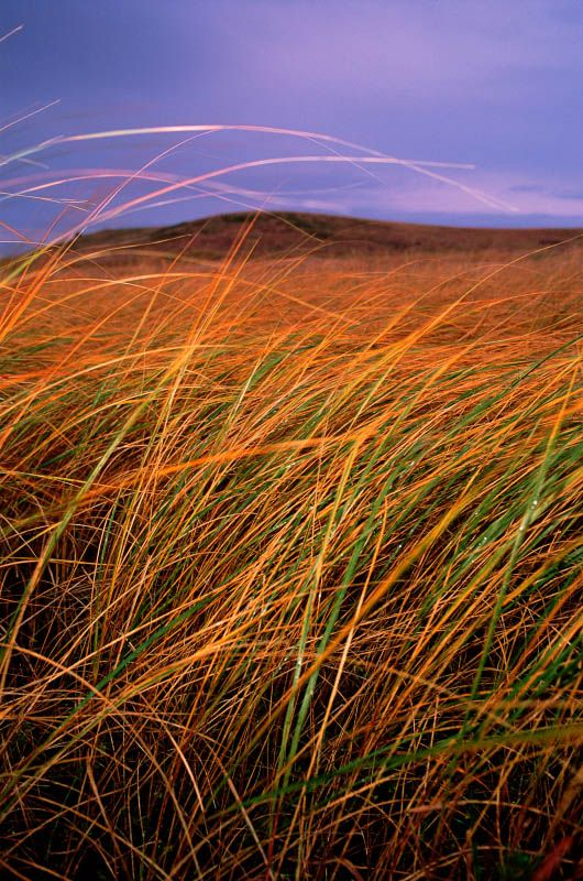 The flint hills are my inspiration for the color scheme in my bedroom--purple, green & orange