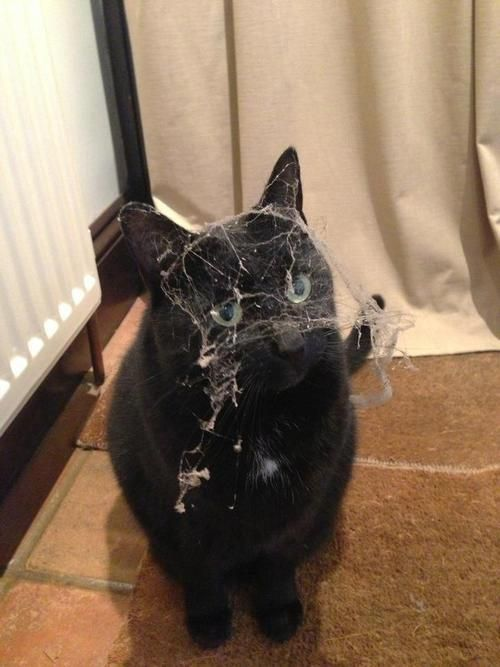This was how my husband's cat The Swiffer got his name; as a kitten, he'd crawl in small spaces that were usually very dusty. He'd get a bath afterwards because of all the cobwebs he pulled up!