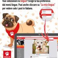 Tutorial Dogalize: scegli la lingua sulla webapp!