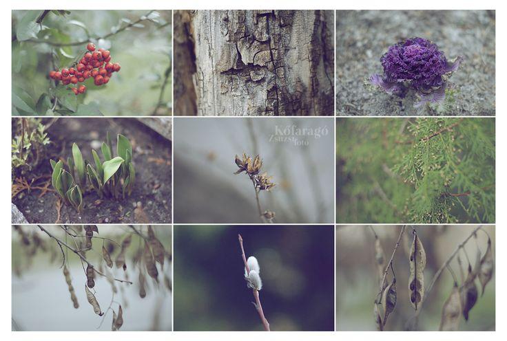 s p r i n g  by kofaragozsuzsiphotos   www.facebook.com/kofaragozsuzsiphotos