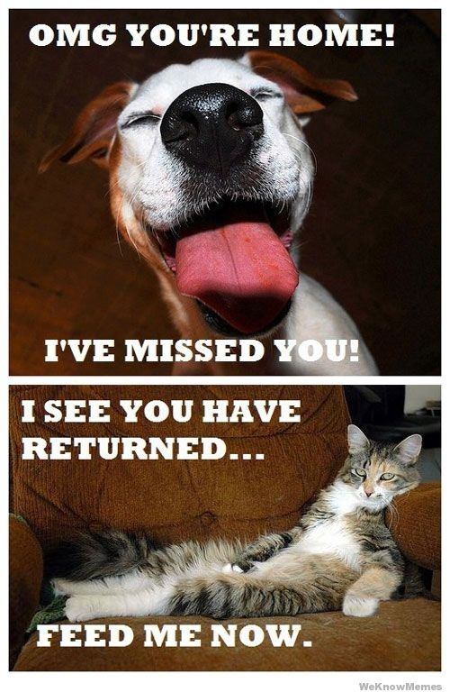 25 Most Adorable Dogs With Cats Memes