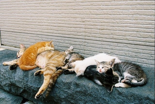 The outbreak of feline sleeping sickness had reached its height. Not that anyone noticed the difference.