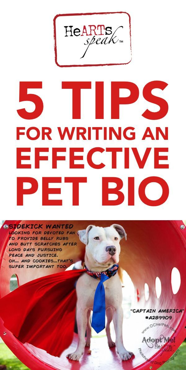 Do you write for your local rescue group? Here are 5 tips ...