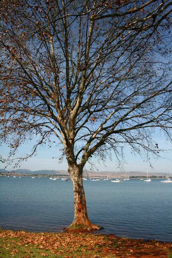 Rising water levels surround a tree at Midmar Dam, Howick, South Africa. Visit the Midlands Meander: www.midlandsmeander.co.za #placestogo
