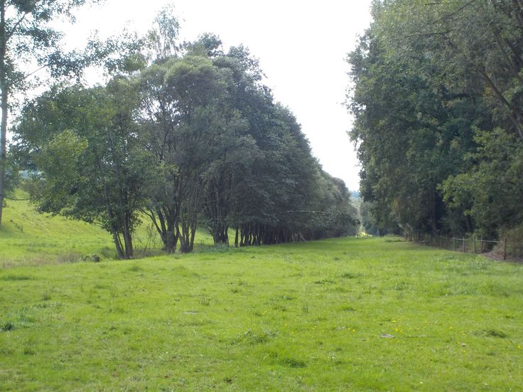 Mead around small river Blanice (Central Bohemia), Czechia
