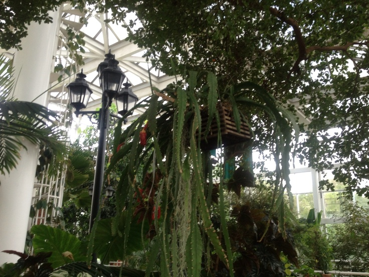 30 Best Must Sees Of Athens Ga Images On Pinterest Athens Athens Georgia And Botanical Gardens