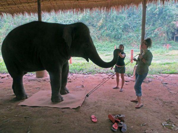 Слоны умнее двухлетних детей