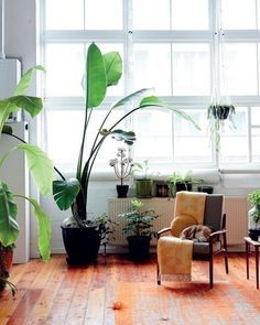 リビングに大きめの観葉植物があるだけで、一気に表情が出ますね。