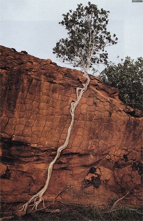 Friday Inspiration #103 - HisPotion. Stay strongly rooted and you can overcome anything!