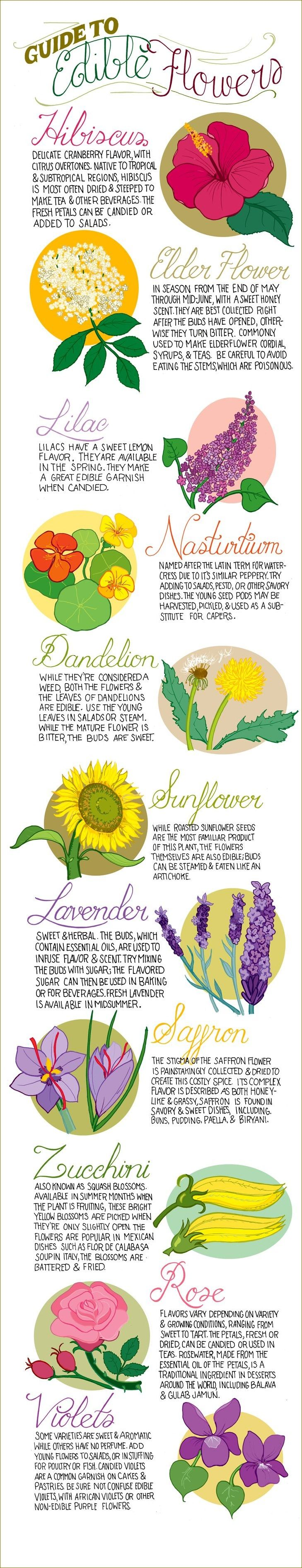 Top 11 Most Edible Flowers: http://homeandgardenamerica.com/top-11-most-edible-flowers