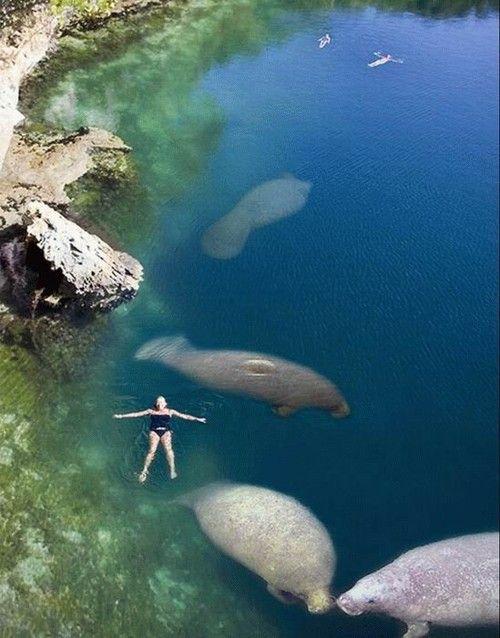 Swim with manatees.