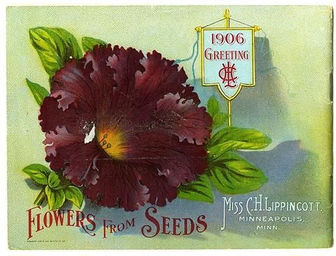"A deep-colored ruffled Grandiflora Petunia is pictured on the back cover of Carrie Lippincott's 1906 catalog.  Carrie Lippincott, the self-proclaimed ""pioneer seedswoman"" and ""first woman in the flower seed industry"" established her mail-order flower seed business in Minneapolis in 1891. She cultivated women customers by sending out smaller 5 inch by 7 inch catalogs with colorful covers during her early years of business.  The covers often featured children."
