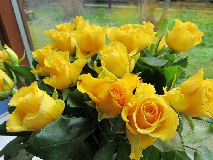 gule roser yellow roses