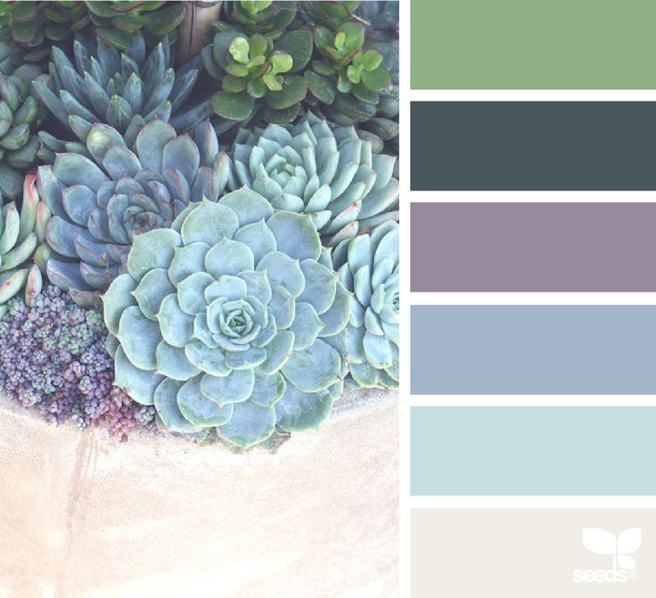 Succulents Archives | Design Seeds