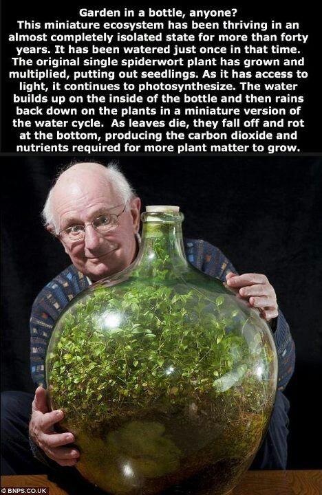 A bottle garden!
