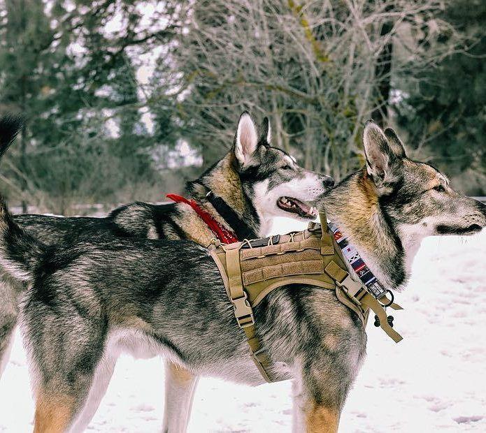 Onetigris Tactical Molle K9 Patrol Dog Vests Harnesses Husky