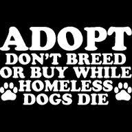 AdoptWorth Reading, Book Worth, Easy Crafts, Pit Bull, Awsome Quotes, Animal Schmanim, Adoption Pets, Pets Stuff, Beautiful Creatures