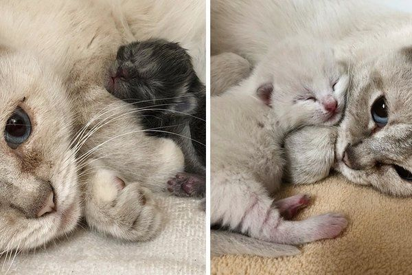 Feral Cat Mom Takes In Orphaned Kitten And Finds Comfort In Her Babies Cat Mom Cute Baby Animals Feral Cats