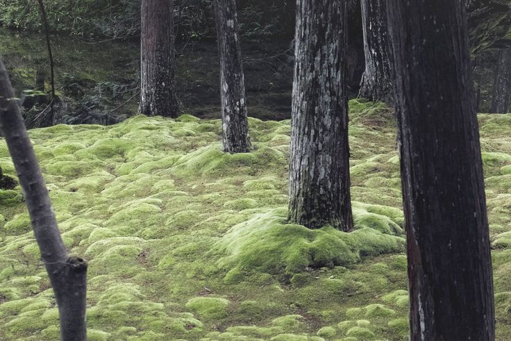 "Moss Temple, ""Kokedera"", Kyoto, Japan. I have to go here."