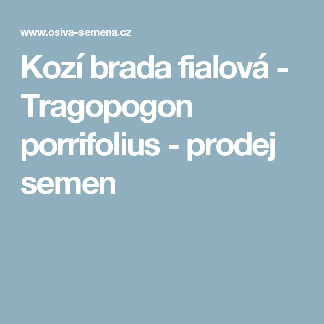 Kozí brada fialová - Tragopogon porrifolius - prodej semen