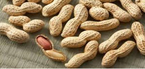 تفسير اكل الفول السوداني في المنام للرجل والعزباء والمتزوجة بالتفصيل Food Allergies Food Allergies Awareness Food Blog