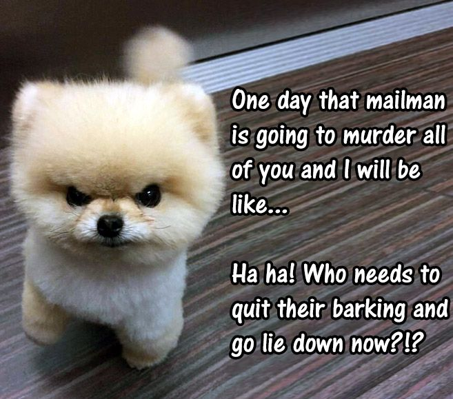 38 Scrappy Memes For Small Dog Lovers Lovely Animals World Cute Dog Memes Dog Lovers Small Dogs