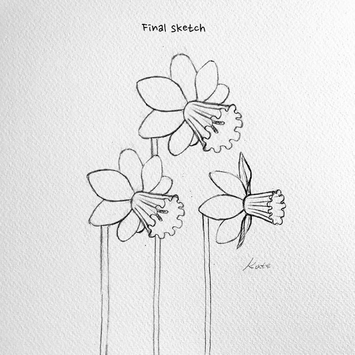White Background Pretty Flowers To Draw Black Pencil Sketch Three Daffodils In 2020 Flower Drawing Flower Drawing Tutorials Cute Flower Drawing