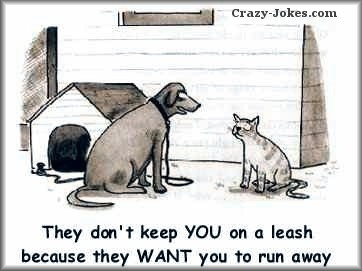 Exactly....: Funny Dogs, Pet, Dogs Cat, Funny Stuff, Smile, Dogcat, Cat Lovers, Hate Cat, Animal
