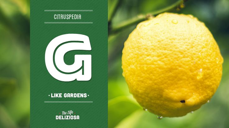 Do you know the origin of the first gardens in human history? Discover more on our Citruspedia.