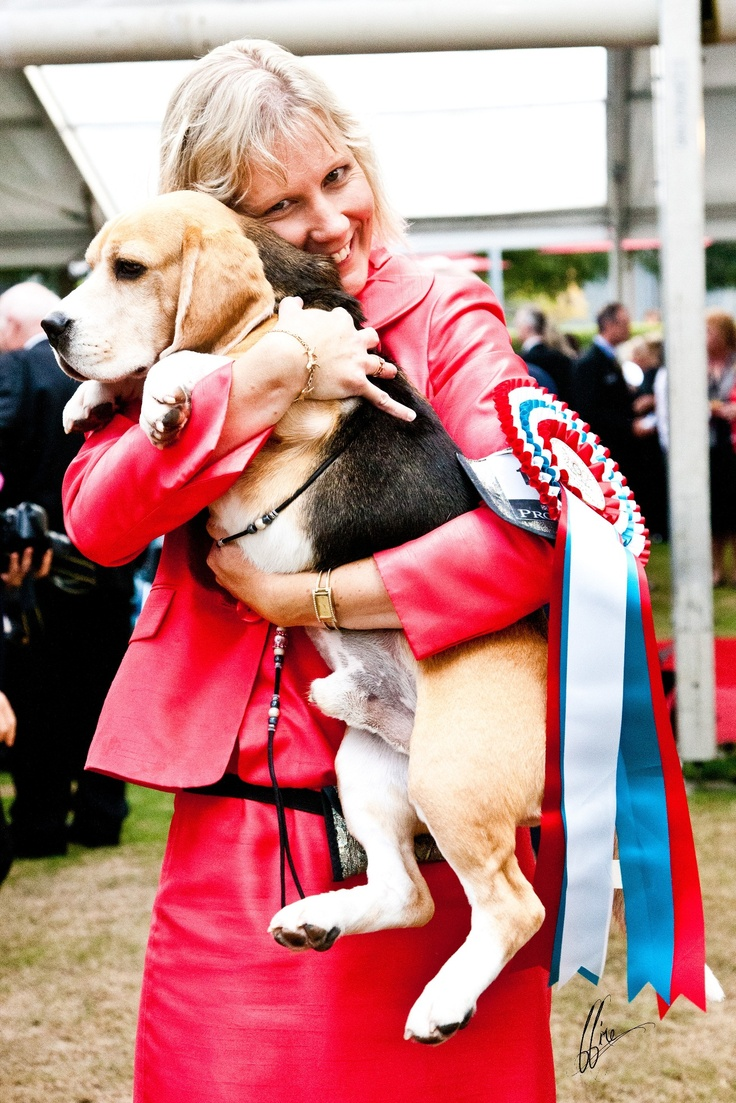 Best Dog In Show winner at the 2012 Purina Sydney Royal Dog Show