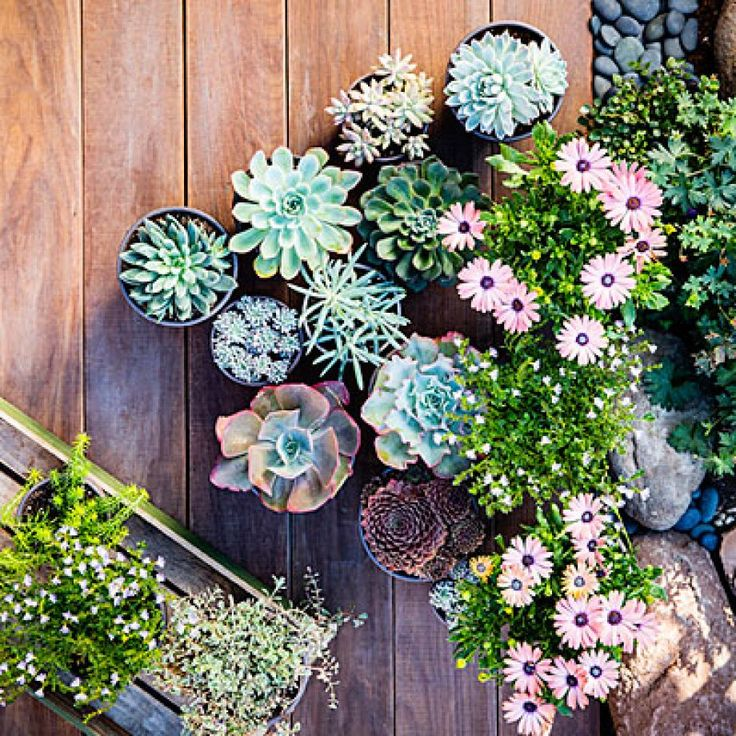 Keep single plants in individual pots to easily change the grouping with the seasons.