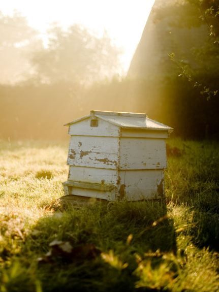 The keeping of bees is like the direction of sunbeams. ~Thoreau