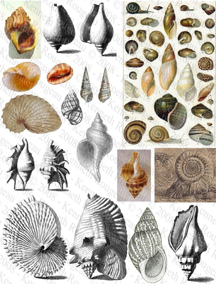 digital shell artwork