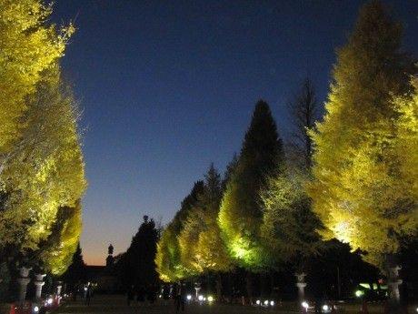 靖国神社でイチョウ並木のライトアップイベント-キッチンカー出店も
