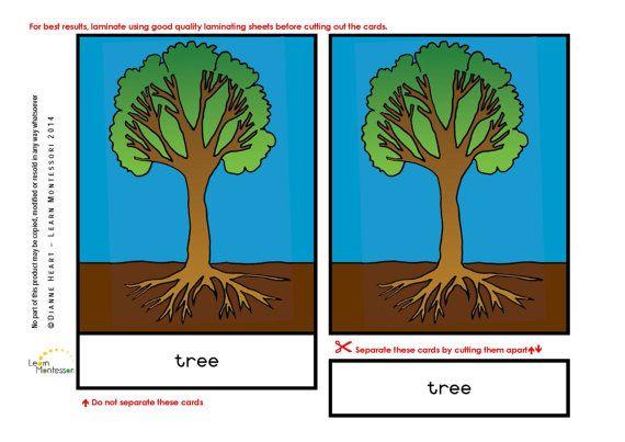Montessori Curriculum  Botany: Parts of the by LearnMontessori