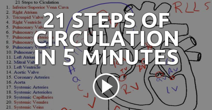 From freshman year all the way until graduation, the circulation of the heart will haunt you! But, you can fight back by becoming confident in your cardiac anatomy and physiology as you memorize the 21 steps of circulation.