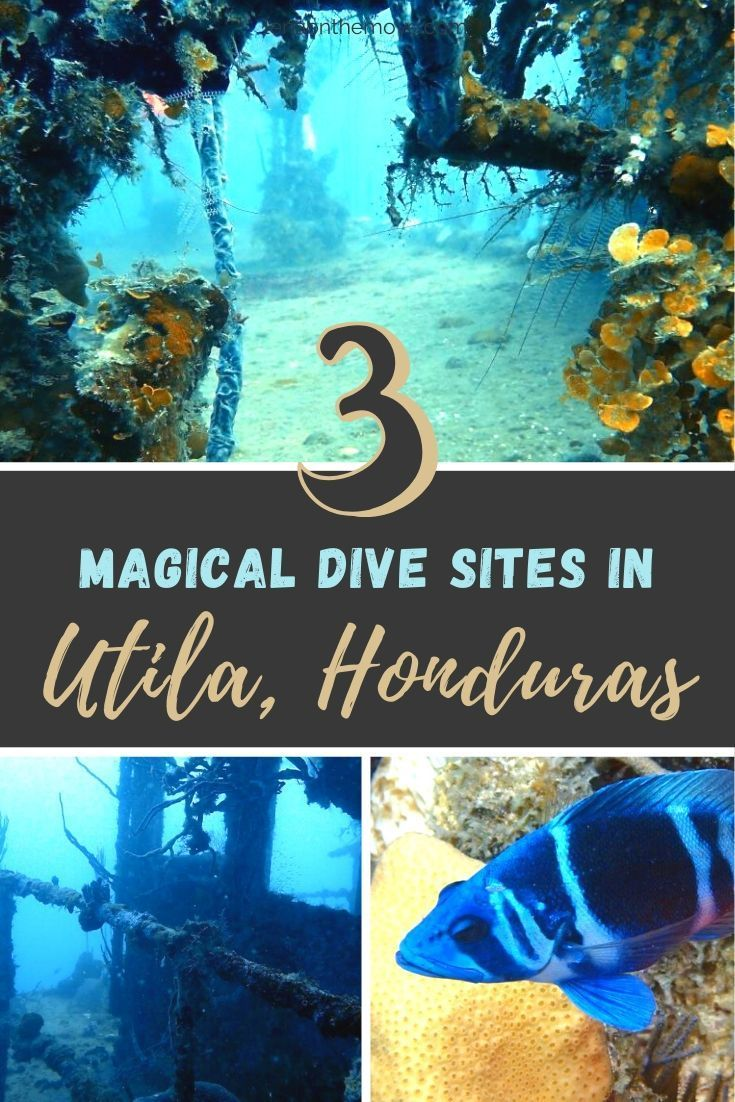 Dive Guide Utila 3 Magical Dive Sites You Need To Be Diving In 2020 Honduras Reisen Tipps