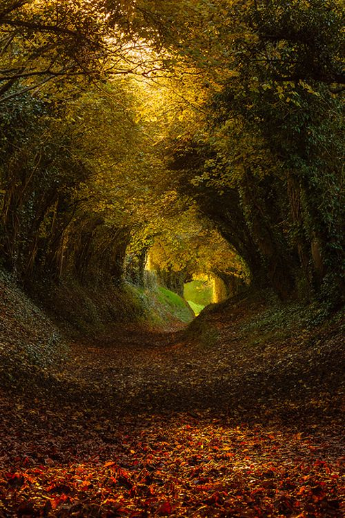 http://e4rthy.tumblr.com/post/111380160256/autumn-tunnel-by-finn-hopson Autumn Tunnel by Finn Hopson