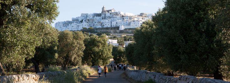Millenari di Puglia - escursioni naturalistiche