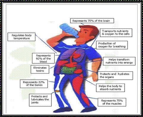 the 25+ best fluid and electrolytes ideas on pinterest | nursing, Skeleton
