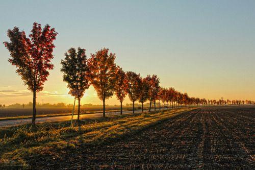 31 ottobre 2015 - L'alba by EOS60  Arturo Arturo Paiano Paiano alba alberi autunno canon EOS60D cielo colori conegliano italy paesaggio