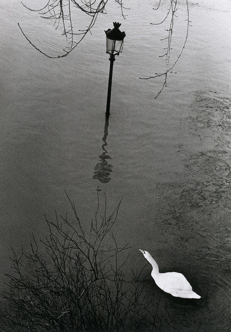 André Kertész  Paris, 1982
