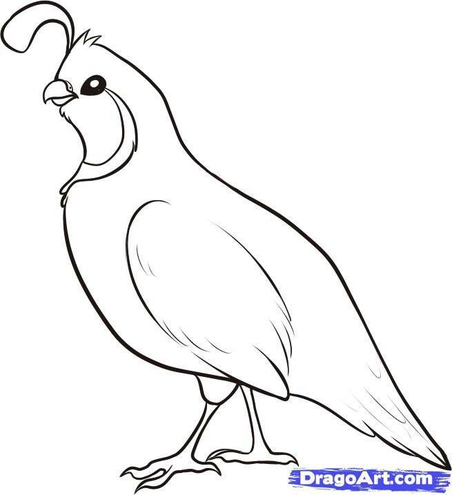 Grab Your Fresh Coloring Pages Quail Download Http Gethighit Com Fresh Coloring Pages Quail Download Bird Drawings Drawings Desert Art